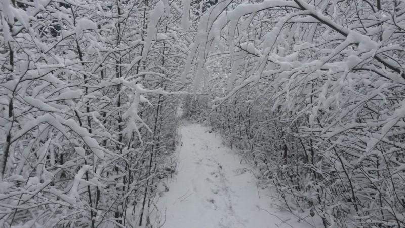 Wittekind Hiking Trail