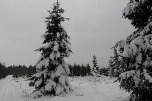 ... wurde es noch richtig winterlich