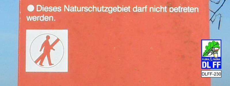 """DLFF-230 """"Daschfeld"""""""