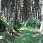 path off the beaten track