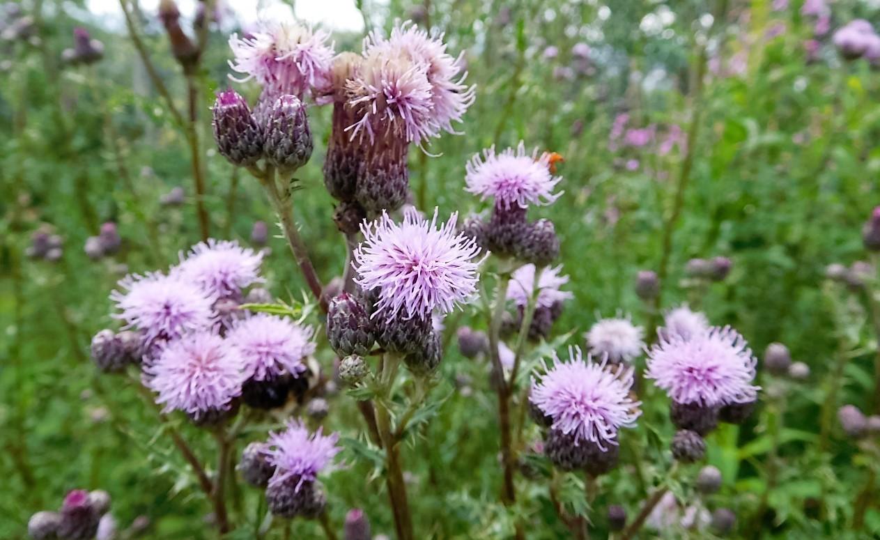 Flowers of TERRA.vita